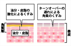 油分・皮脂の酸化によるくすみ、肌代謝の遅れによる角質のくすみ